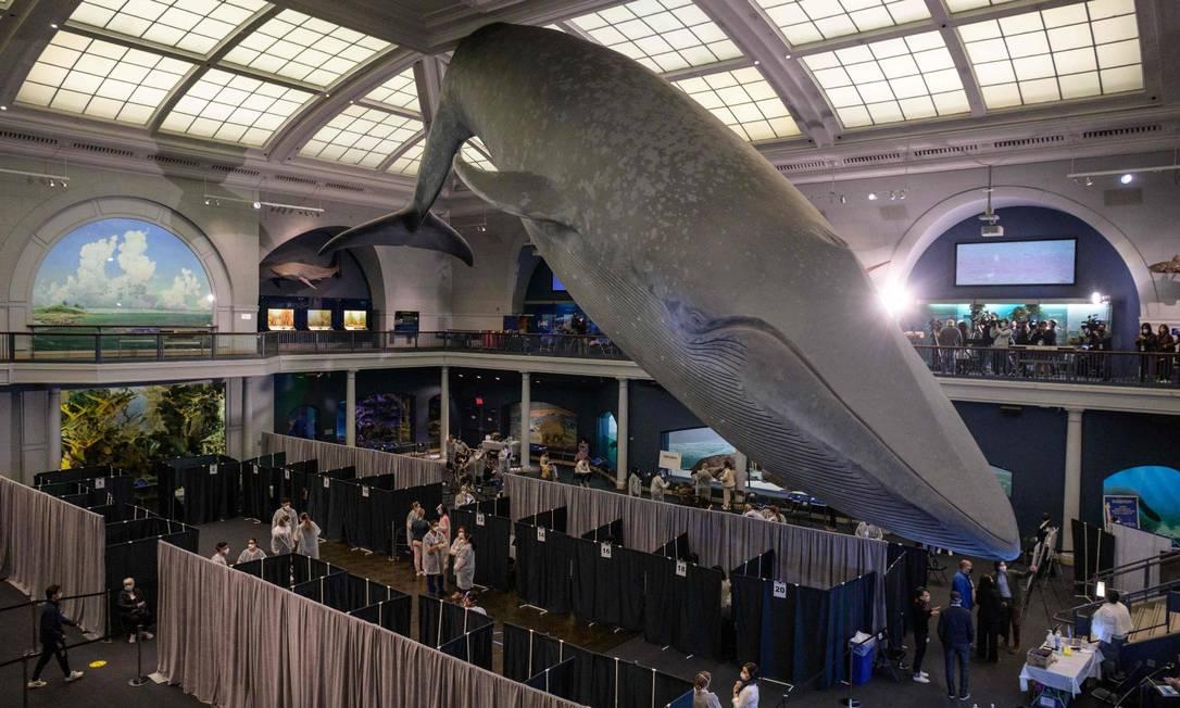 Museu Americano de História Natural, em Nova York, foi transformado em centro de vacinação Foto: ANGELA WEISS / AFP/23-4-21