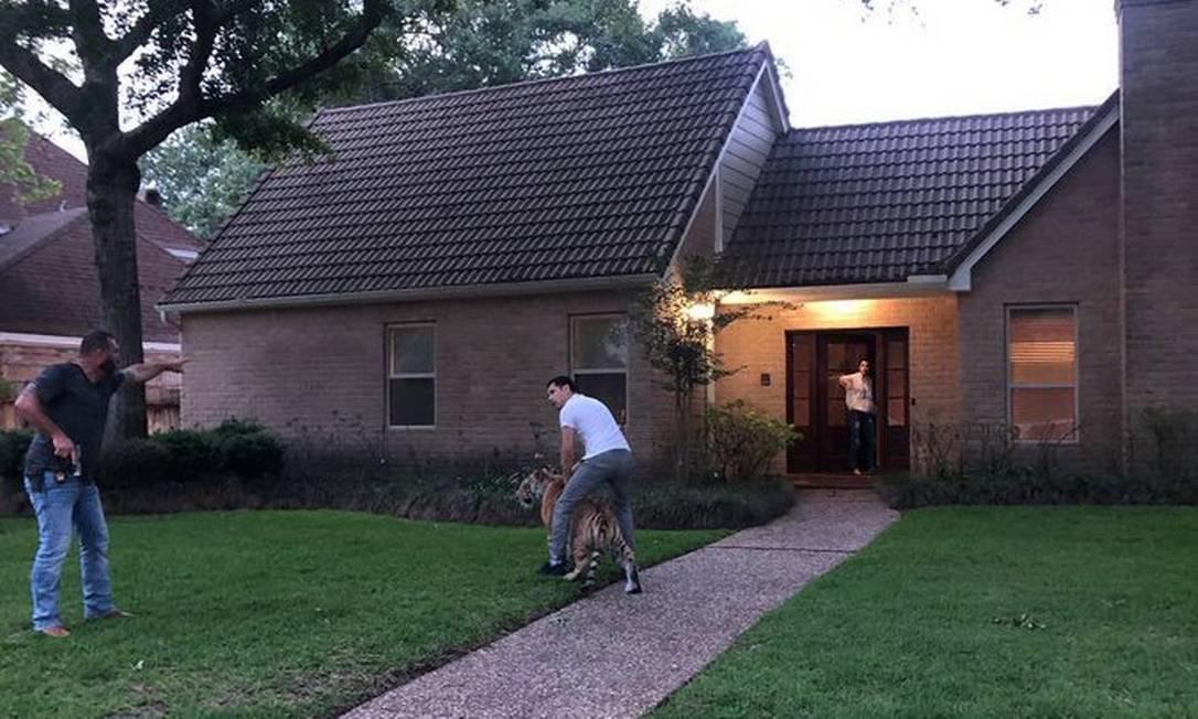 Tigre estava andando pelas ruas de Houston, nos Estados Unidos Foto: Reprodução