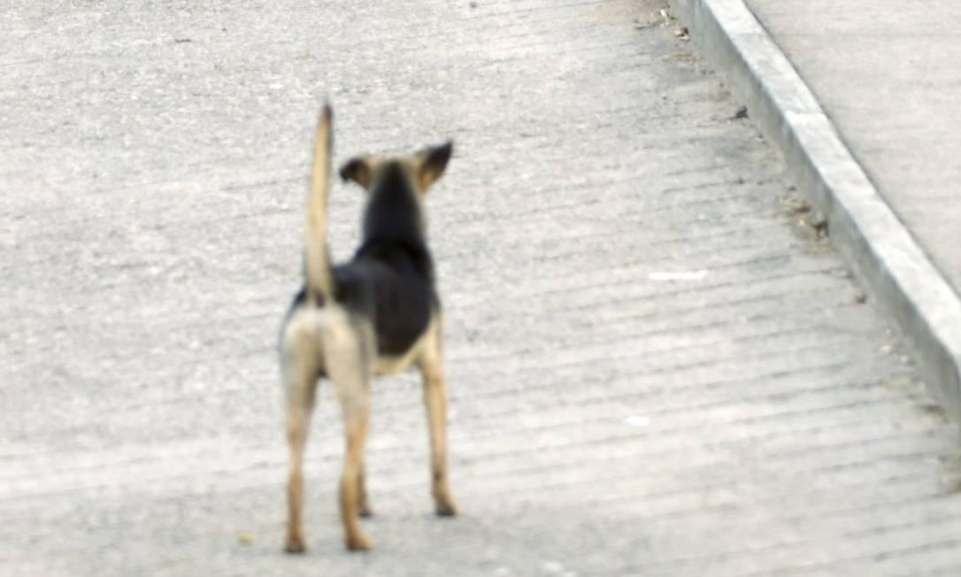 Cachorro vira-lata em rua do Rio Foto: Gabriel de Paiva/29.06.2018 / Agência O Globo