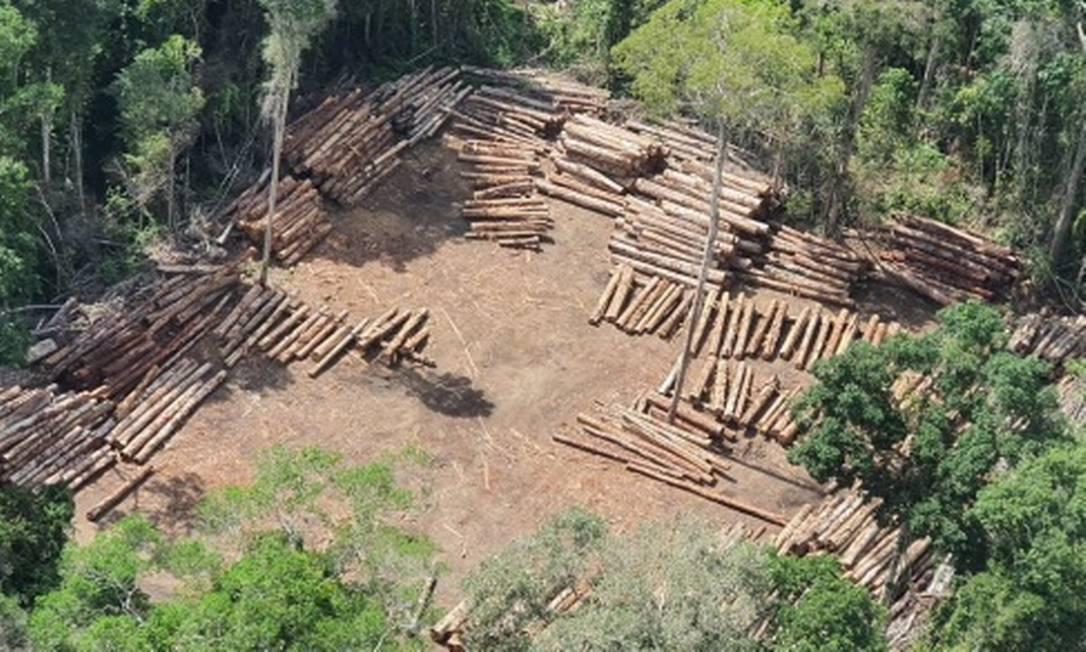 Carga de 2.100 m³ de madeira apreendida pela PF na Amazônia por suspeita de desmatamento que foi devolvida por ordem judicial Foto: Reprodução