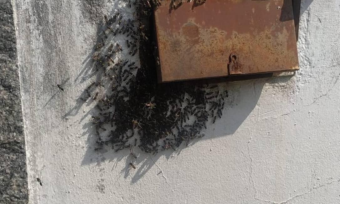 A moradora do bairro de Itaipu, em Niterói,Ingrid Nazareth postou em sua conta no Twitter a revoada dos insetos em sua casa. Foto: Reprodução / Twitter