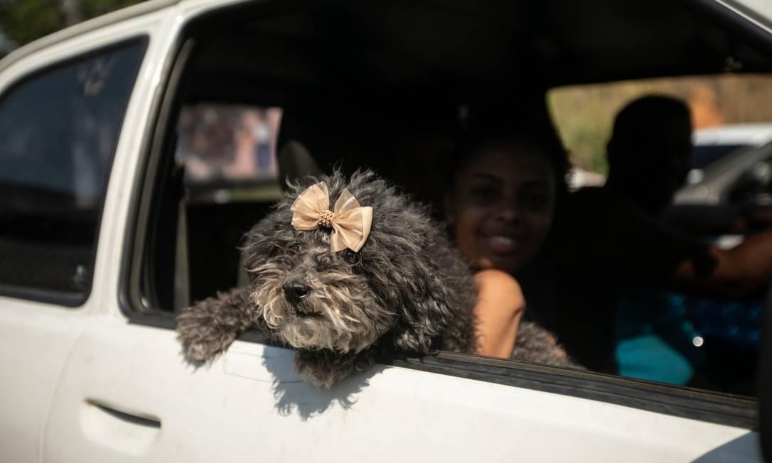 Caxias tem posto drive thru para campanha de vacinaçao contra raiva em animais Foto: Brenno Carvalho / Agência O Globo