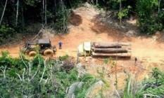 Desmatamento na Terra Indígena Karipuna, em Rondônia Foto: Chico Batata/Greenpeace