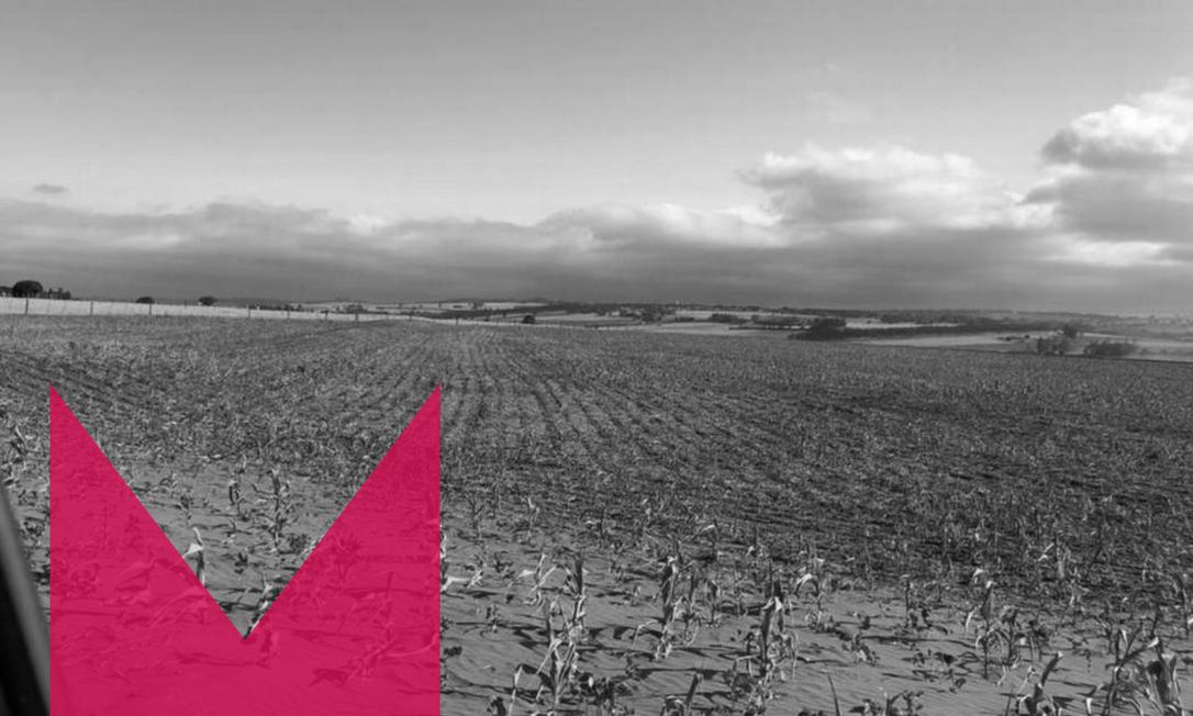 Plantação arrasada pela seca em Munhoz de Mello (PR) Foto: Arquivo pessoal
