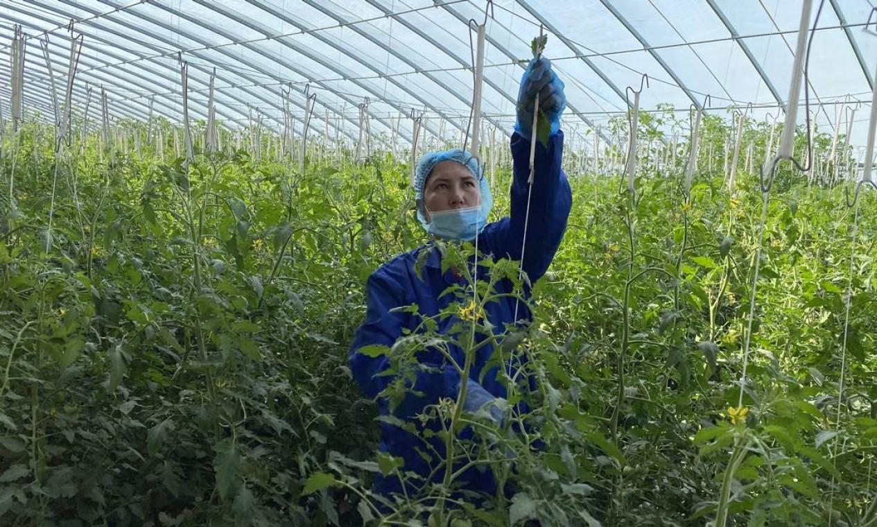 Agricultura sustentável em Kashgar recebe investimento da província de Shandong Foto: Marcelo Ninio / Agência O Globo