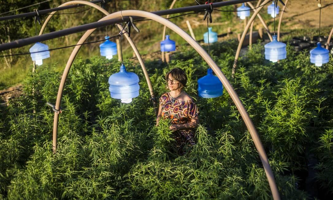 Margarete Santos de Brito em meio aos pés de maconha plantados na fazenda no interior do Rio Foto: DANIEL RAMALHO