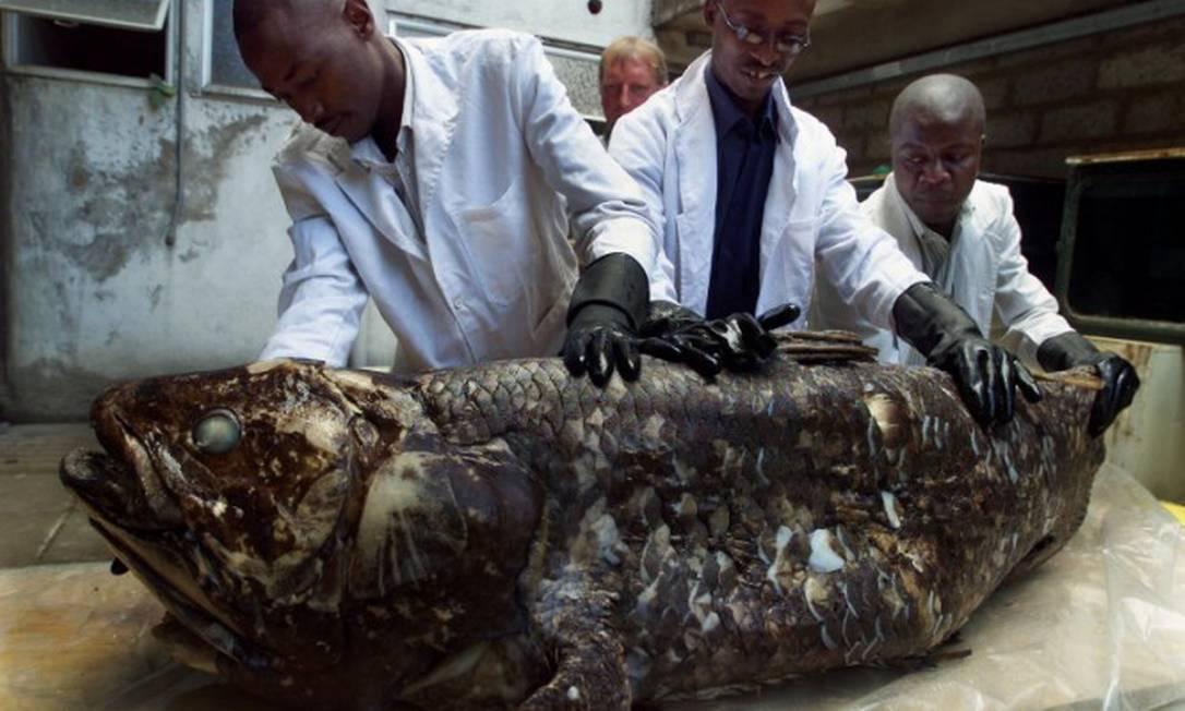 Pesquisadores do Quenia mostram cecalanto encontrado em 2001 Foto: SIMON MAINA / AFP