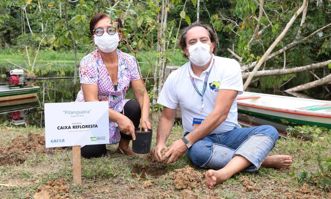 Pedro Guimarães ajuda a plantar uma árvore em Cruzeiro do Sul, no Acre. Foto: Caixa / Divulgação