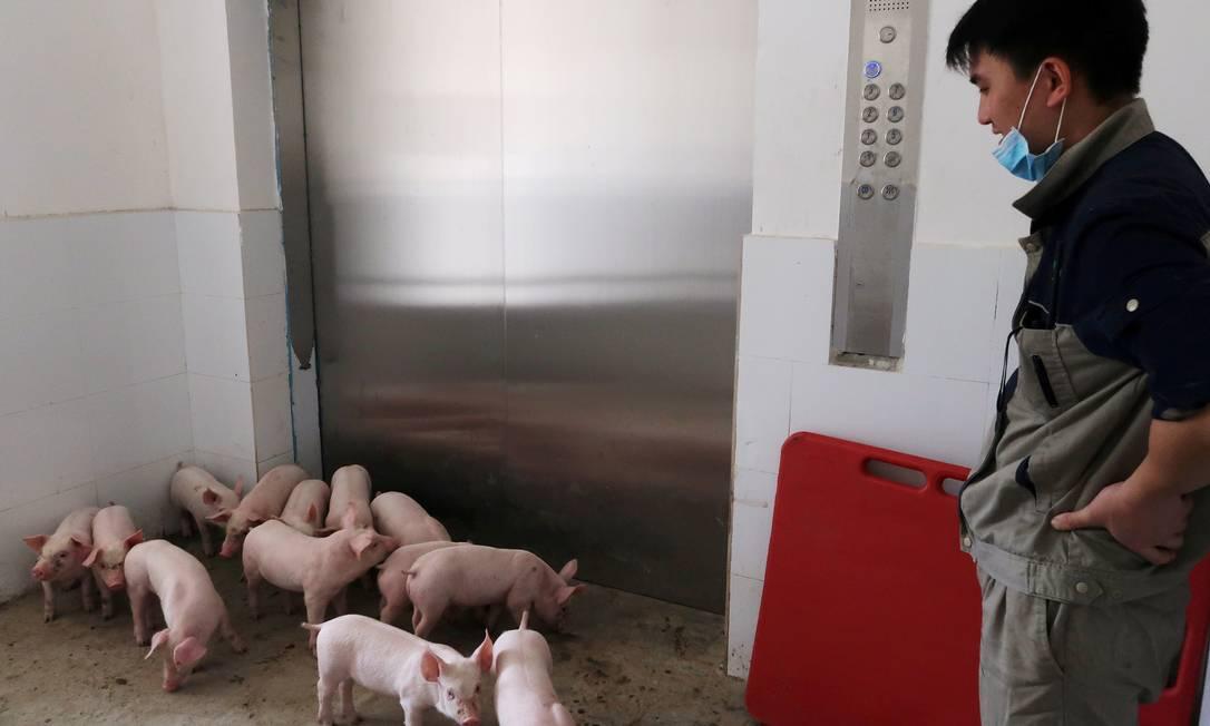 Dentro da fazenda vertical GuangxiYangxiang, na China, os porcos são transportados por elevador Foto: Dominique Patton / Reuters