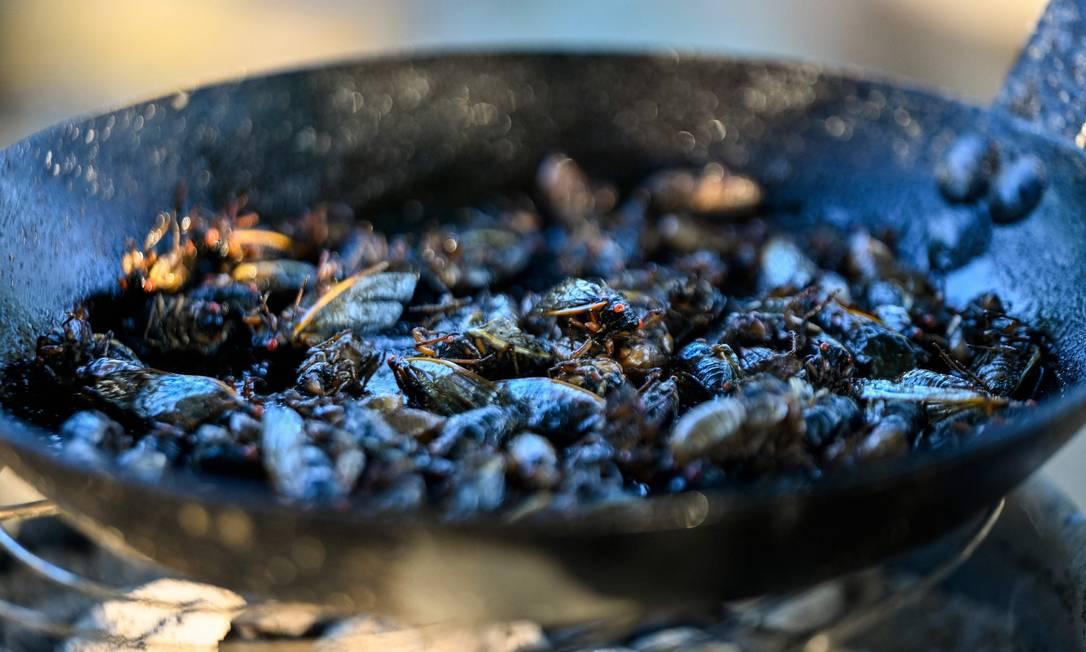 Cigarras são fritas para uma receita de sushi feita pelo chef Bun Lai no Fort Totten Park em Washington, DC. Foto: ANDREW CABALLERO-REYNOLDS / AFP