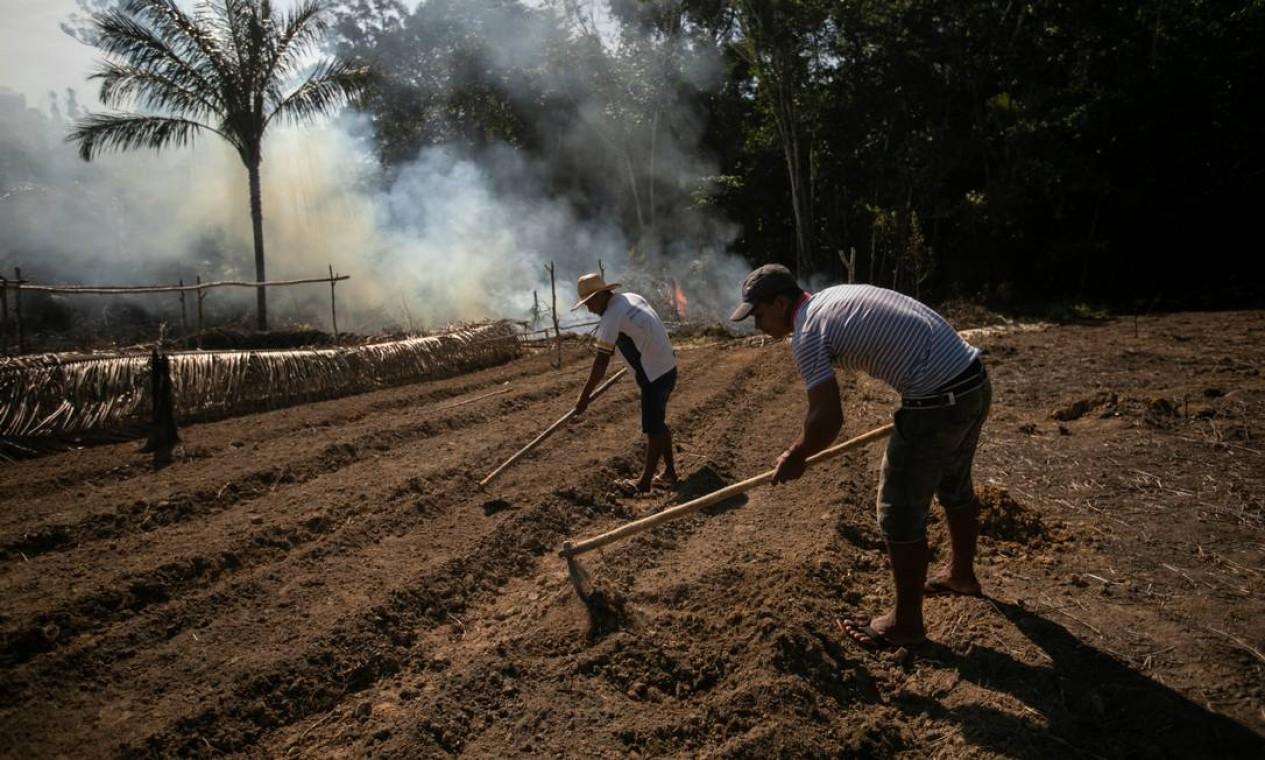 Habitantes locais preparam a terra para agricultura em meio à Floresta Nacional Jacundá Foto: Brenno Carvalho / Agência O Globo