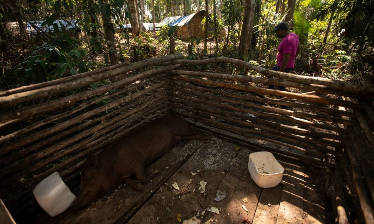 Assentamento tem criação de animais Foto: Brenno Carvalho / Agência O Globo
