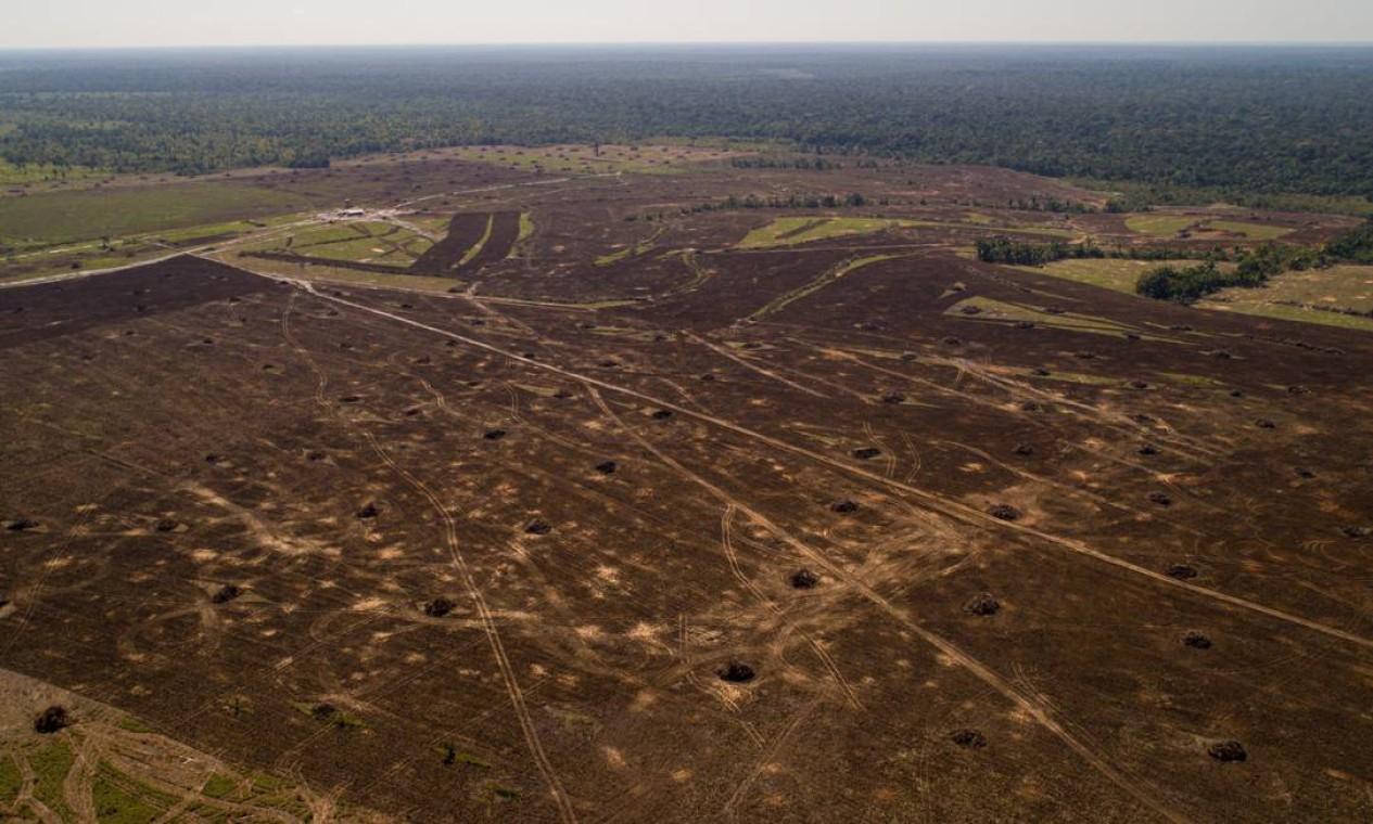 Grandes campos de desmatamento florestal próximo à BR-319 Foto: Brenno Carvalho / Agência O Globo