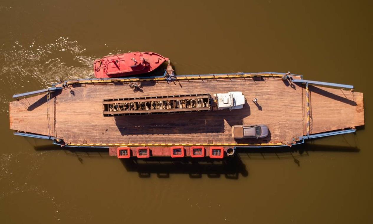 Caminhão carregado de bois atravessa o rio Aripuanã em uma balsa em direção a Apuí, no Sul do Amazonas. Áreas de floresta da região estão sendo desmatadas e dando lugar a pastagens para alimentar o gado Foto: Brenno Carvalho / Agência O Globo