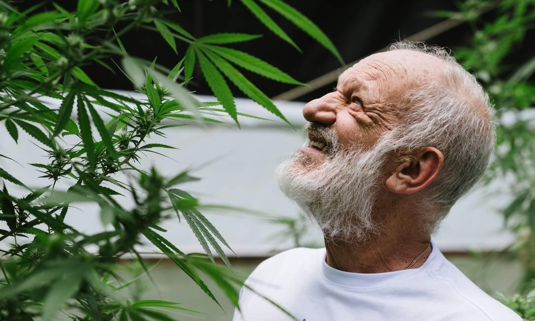 O ator aposentado e ativista canábico Ricardo Petraglia Foto: Rogerio Von Kruger / Divulgação