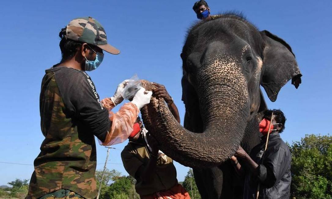 Amostras foram coletadas para testagem de covid-19 em una reserva no sul da Índia Foto: AFP