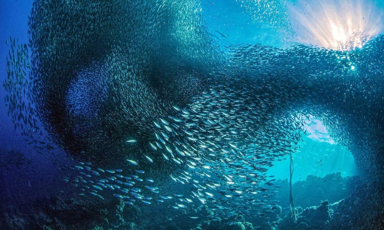 Com esse registro, de um balé improvisado por um cardume de sardinhas, na costa de Cebu, nas Filipinas, o fotógrafo italiano Marchione Giacome foi finalista na categoria Paisagem Marinha Subaquática Foto: Marchione Giacome / Divulgação