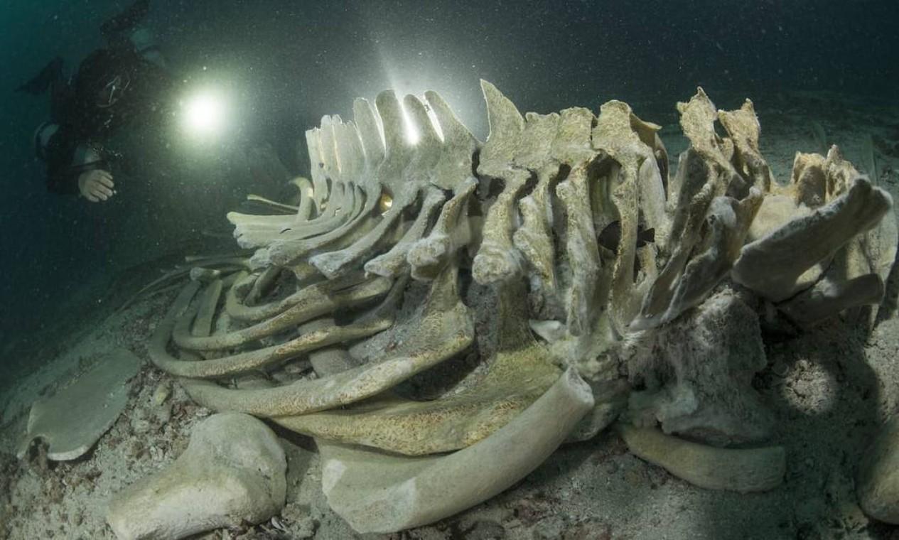 Outro finalista da categoria Descobertas Oceânicas foi esse esqueleto de baleia, fotografado na Ilha Koh Haa, no Parque Nacional Mu Koh Lanta, na Tailândia, por Sirachai Arunrugstichai Foto: Sirachai Arunrugstichai / Divulgação