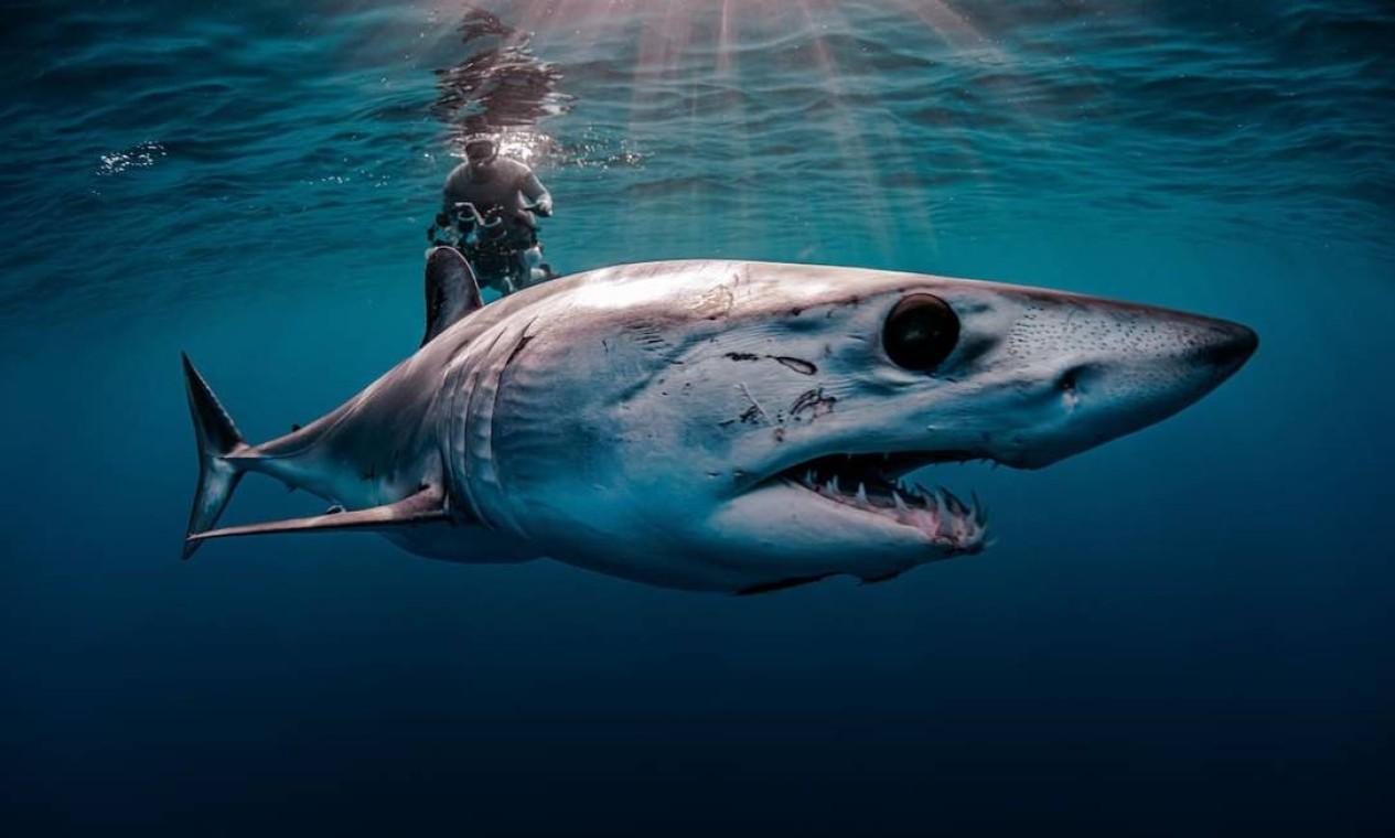 O fotógrafo americano Evans Baudin chegou à final da categoria com este registro de um tubarão-mako, na costa do estado mexicano da Baja California Foto: Evans Baudin / Divulgação