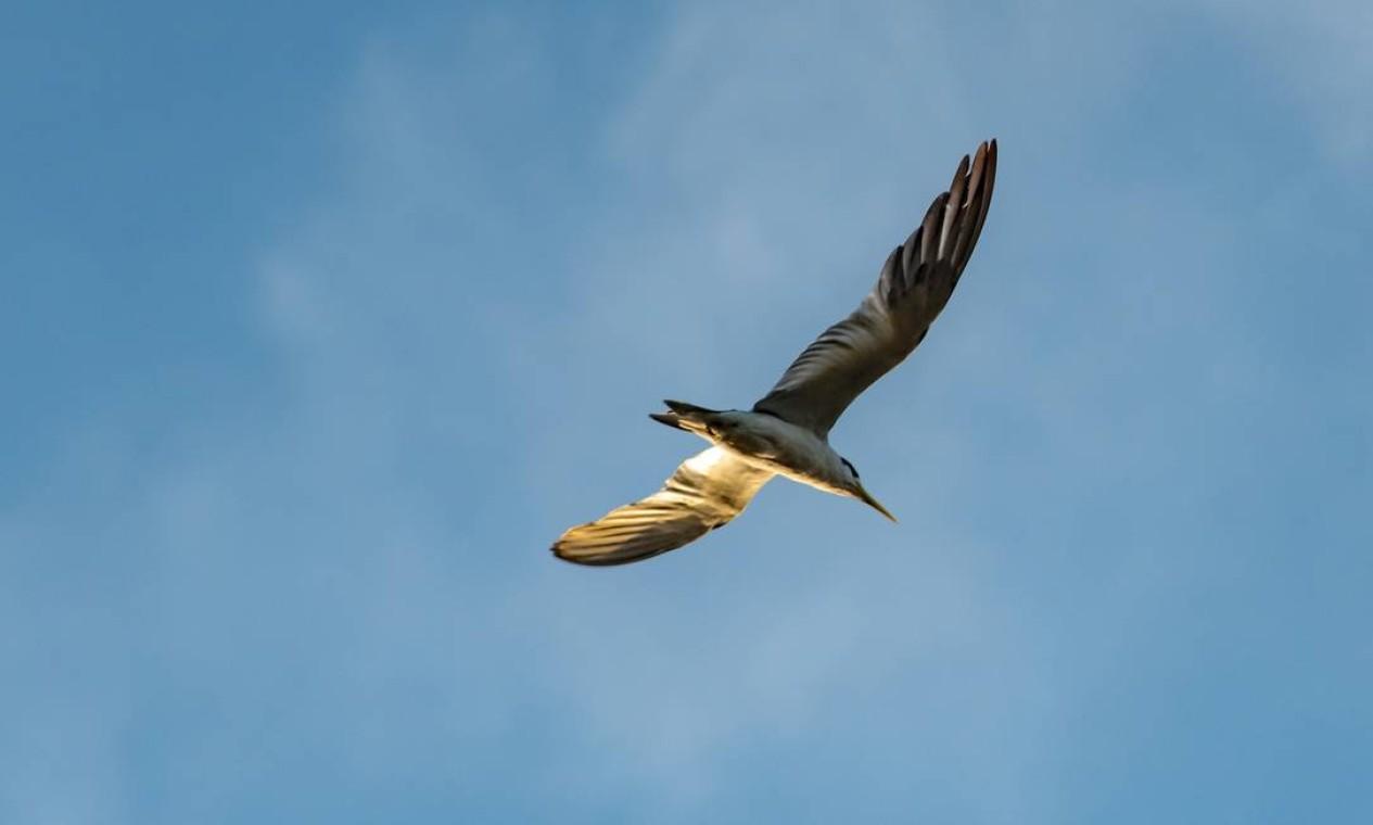 Pássaro cruza o céu do Pantanal mato-grossense Foto: José Medeiros / Agência O Globo