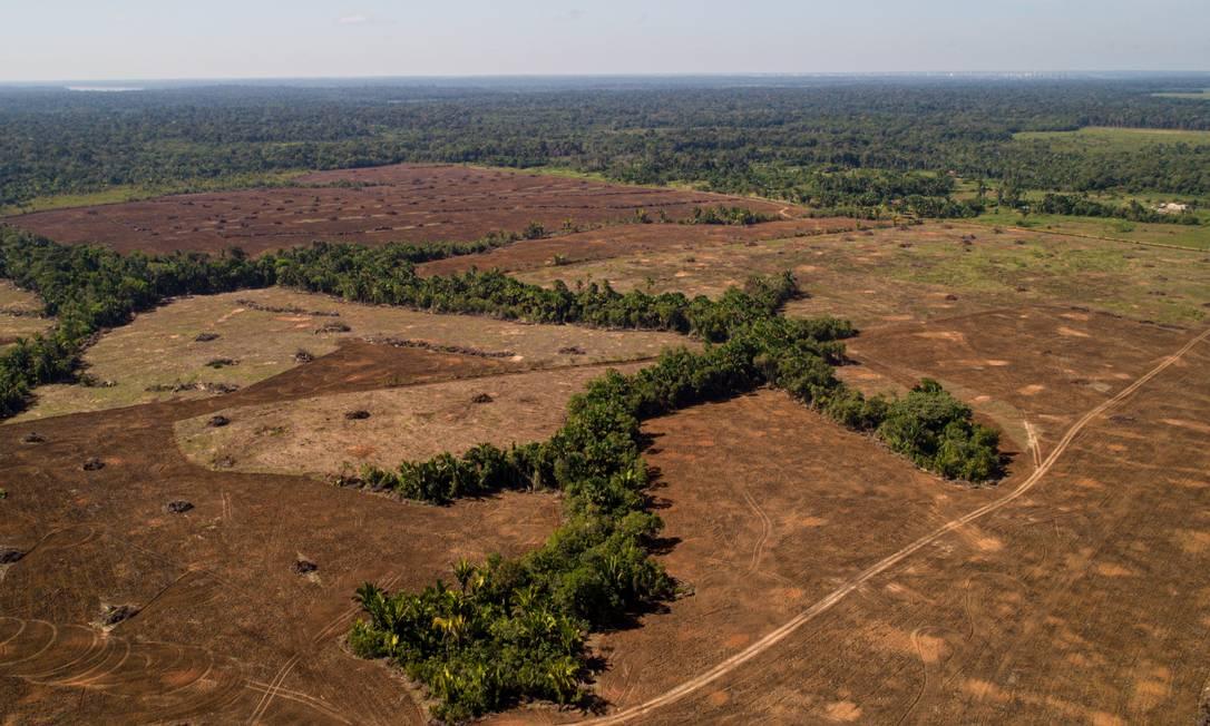 Grandes campos em desmatamento próximo à BR319, na cidade de Realidade (AM). Foto: Brenno Carvalho / Agência O Globo