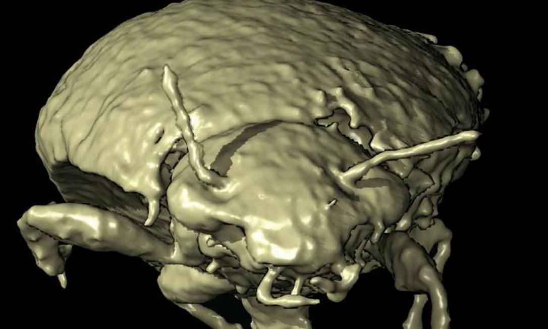 Modelo 3D da vista anterior do besouro Triamyxa coprolithica Foto: Qvarnström et al