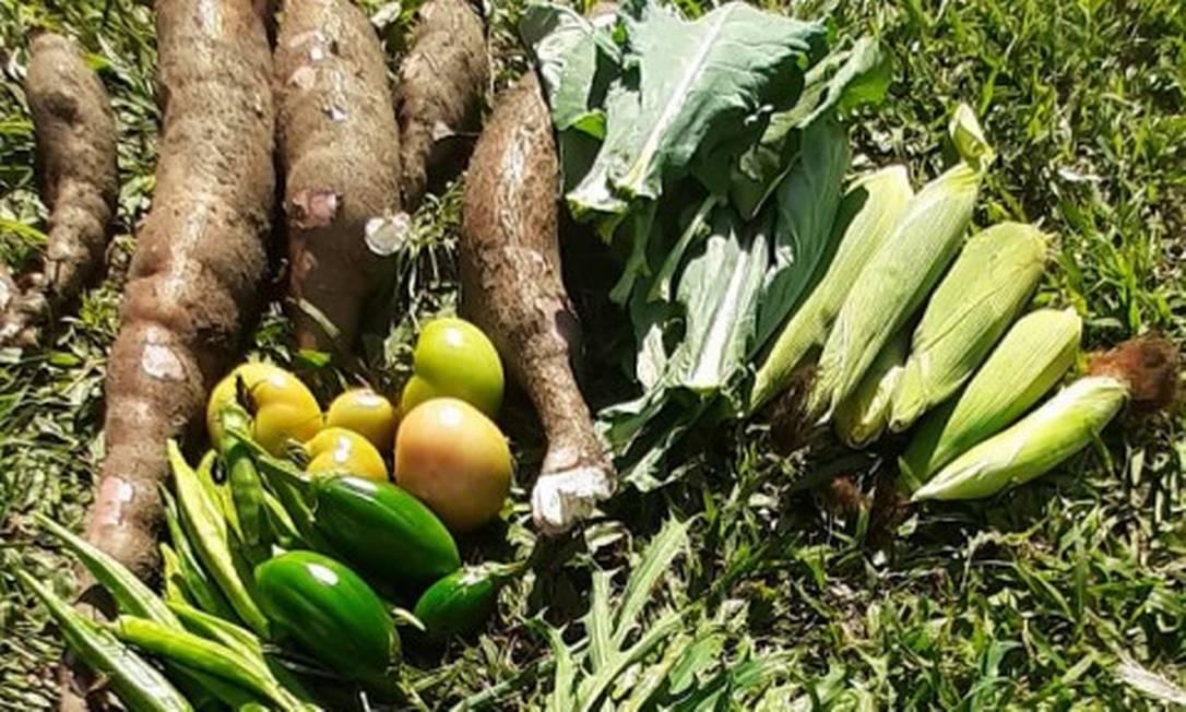 Coletivo Nossa Horta Comunitária estimula o plantio compartilhado em Vargem Grande Foto: Coletivo Nossa Horta Comunitária