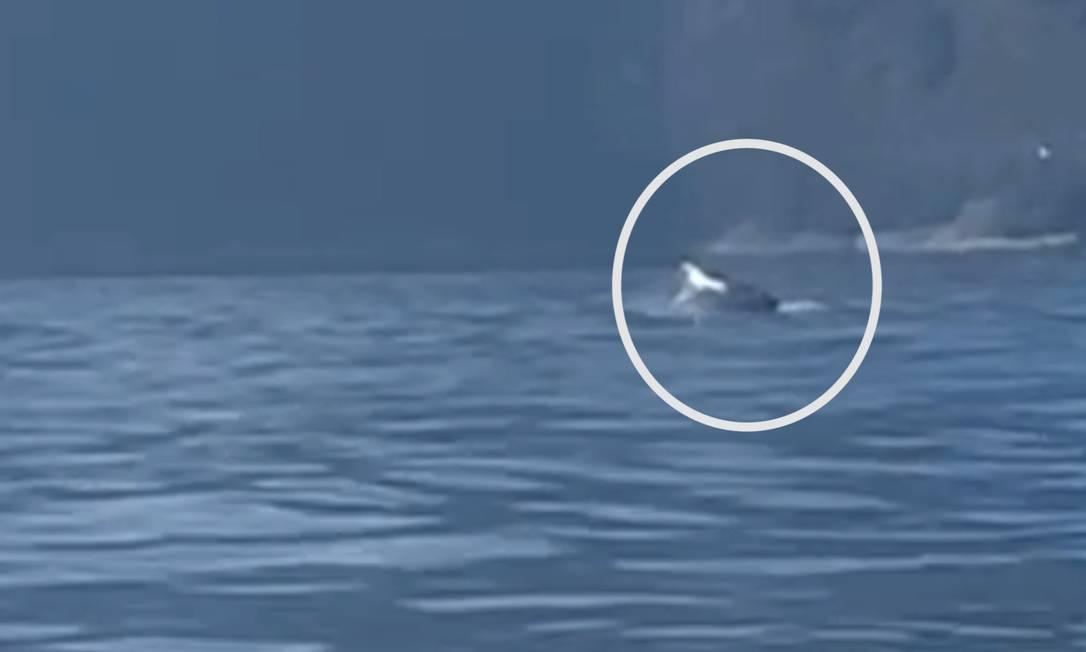 Animal foi visto por uma equipe de canoagem que passava próximo Foto: Reprodução