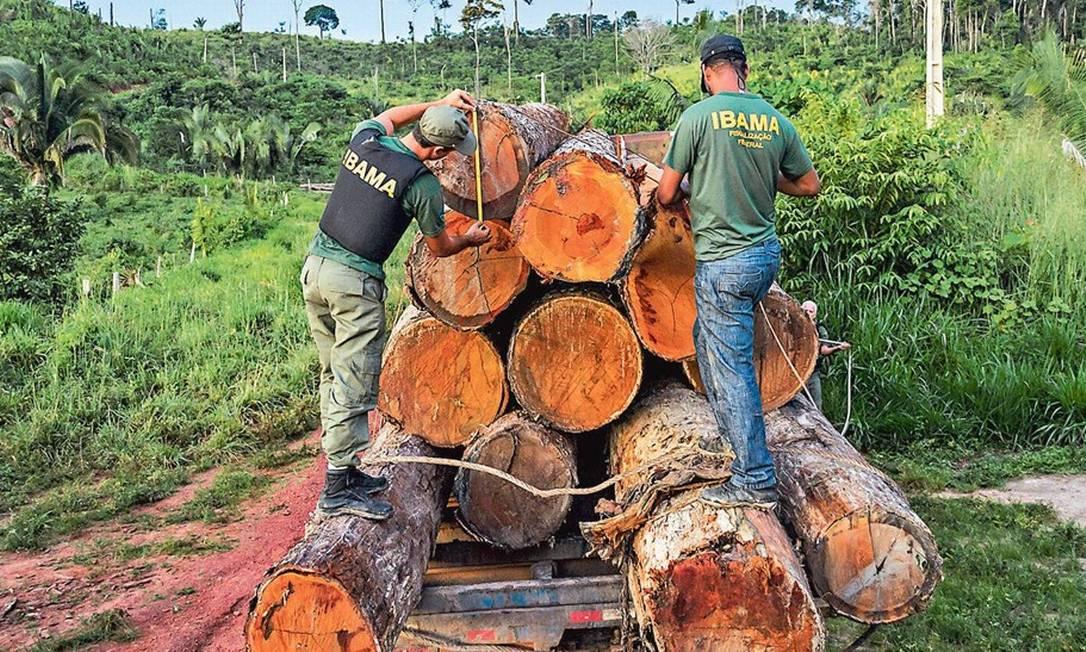 Fiscais do Ibama apreendem madeira ilegal na Amazônia: trabalho comprometido pela falta de agentes Foto: Divulgação