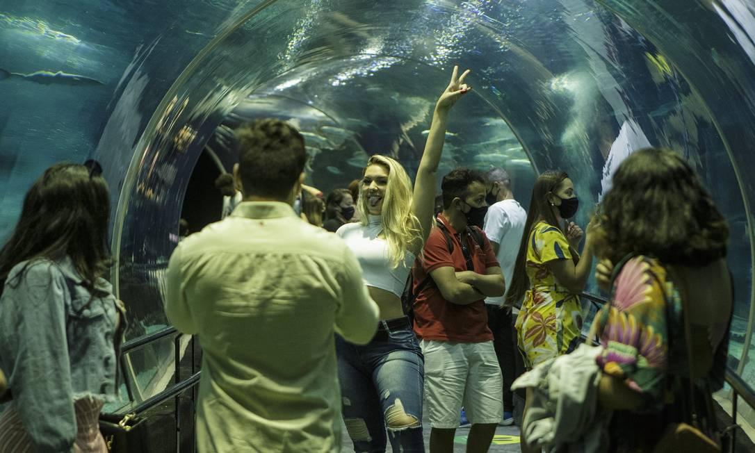 AquaRio tem programação dedicada aos tubarões. Foto: Alexandre Cassiano / Agência O Globo
