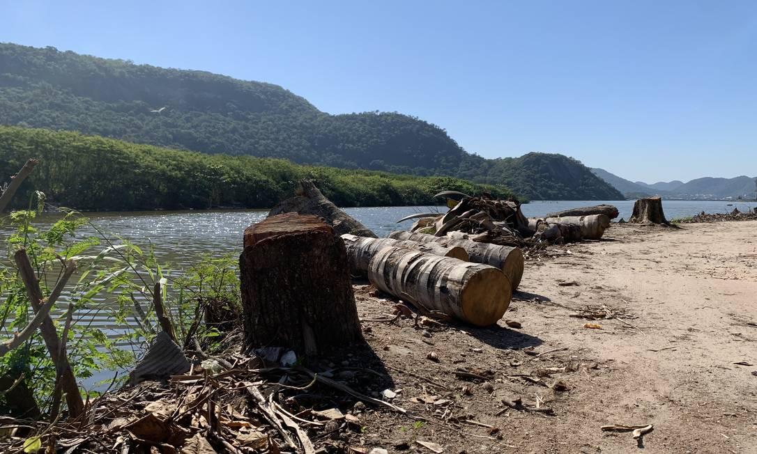 Árvores já derrubadas às margens da Lagoa de Piratininga Foto: Divulgação