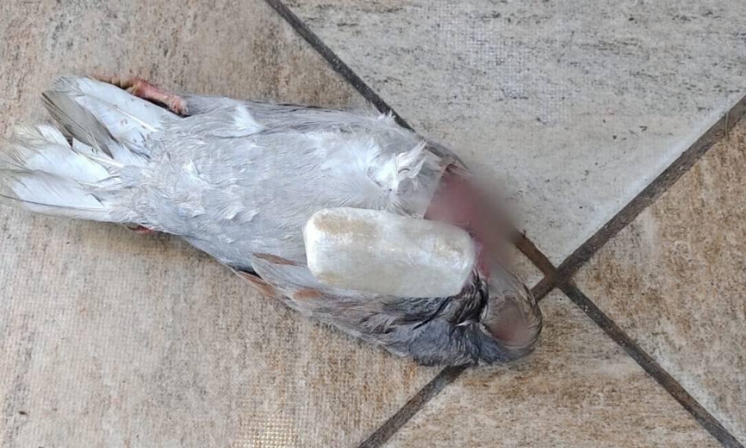 Pombo é encontrado morte e com pasta base de cocaína na cadeia Foto: Divulgação