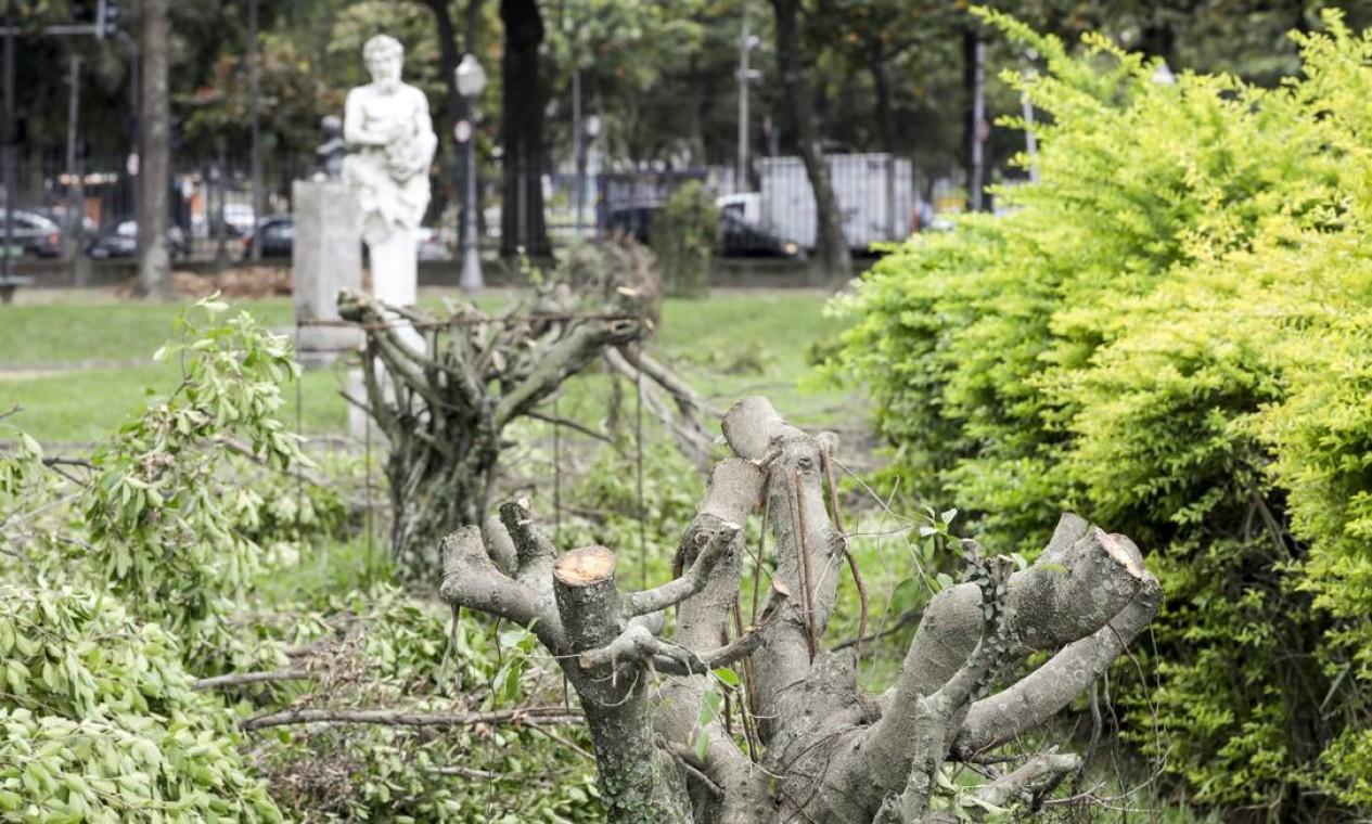 O trabalho que deveria ser para 'esculpir' a copa das árvores acabou descaracterizando a paisagem Foto: Gabriel de Paiva / Agência O Globo
