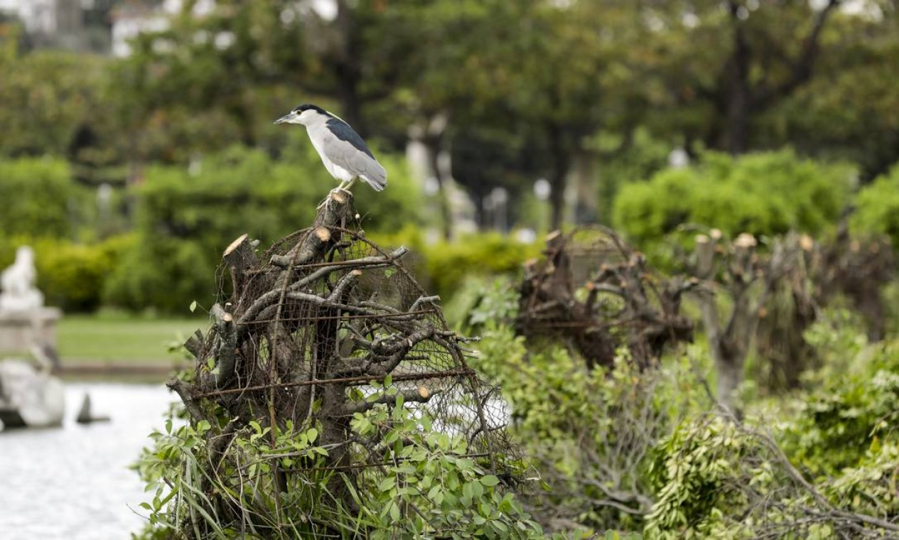 Segundo visitantes, as árvores foram podadas com ninhos de pássaros Foto: Gabriel de Paiva / Agência O Globo