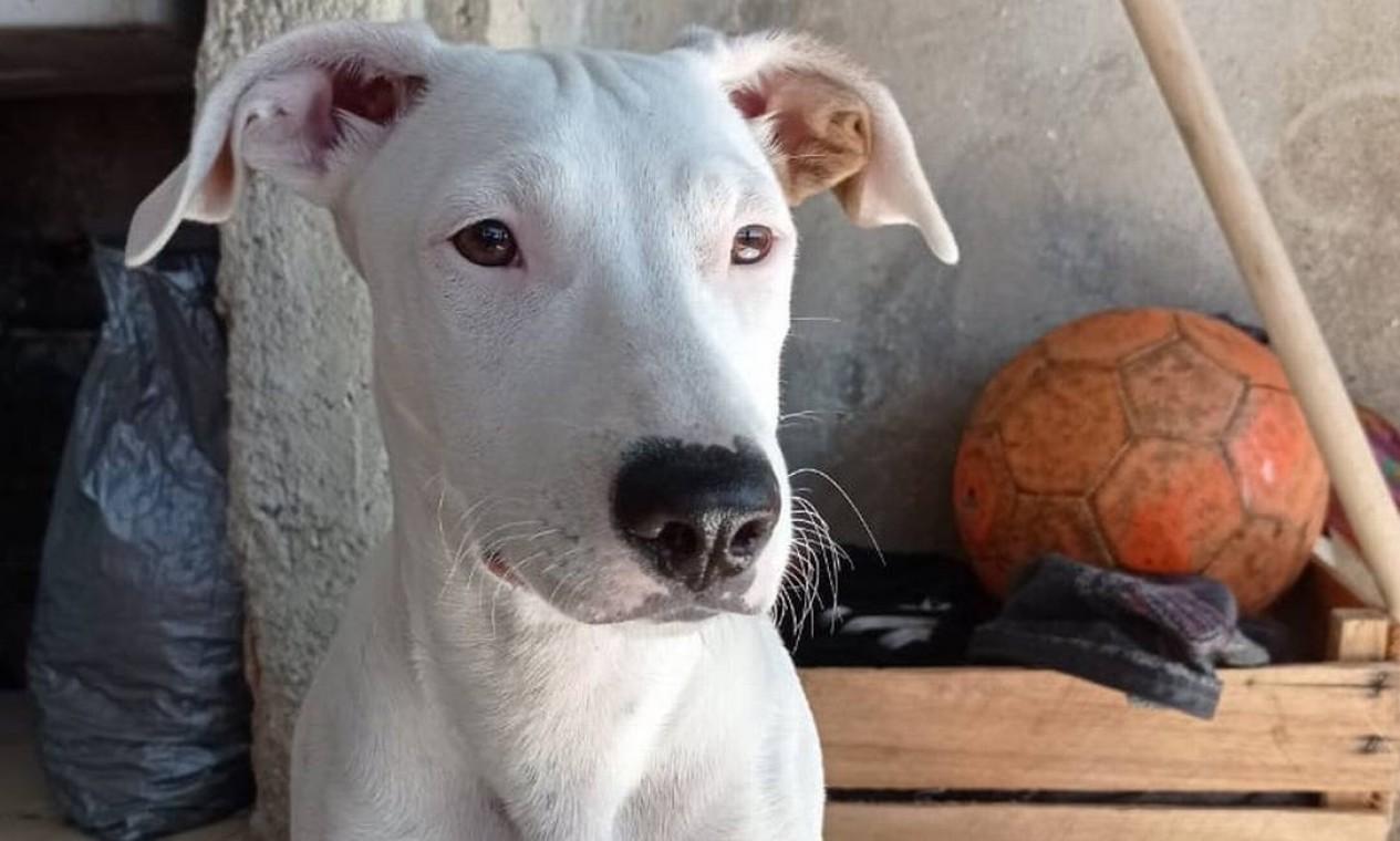 A cadela Malu, morta com tiro disparado por policial Foto: Reprodução