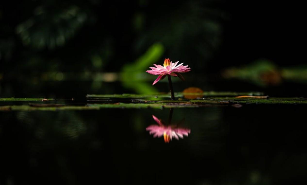O sítio reúne um acervo de mais de 3.500 espécies de plantas tropicais Foto: Hermes de Paula / Agência O Globo