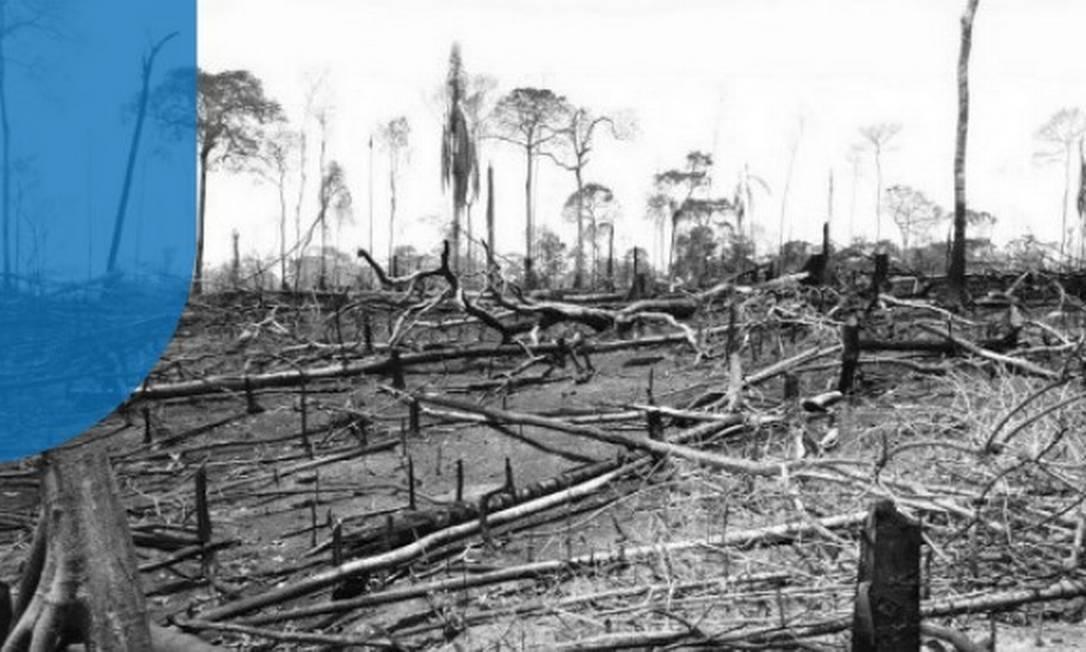 Desmatamento dentro da Reserva Extrativista Chico Mendes Foto: Arquivo pessoal