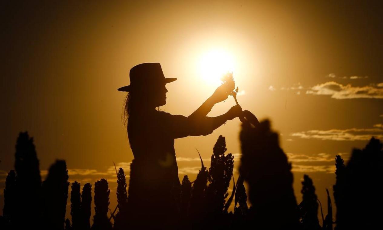 Ana Paula Franciosi inspeciona plantação de uma das propriedades de sua família no Oeste da Bahia: região vive bonança que ela não vê, por exemplo, em Porto Alegre, onde foi estudar Foto: Pablo Jacob / Agência O Globo