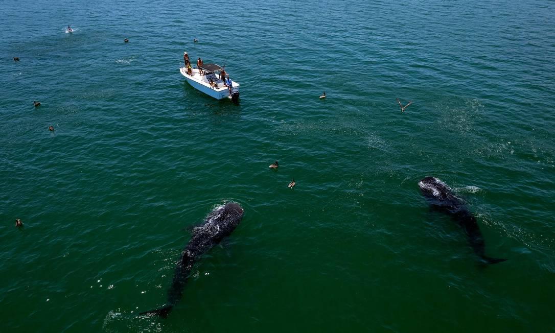 El Golfo de California, también conocido como Mar de Cortés, es ahora Patrimonio de la Humanidad por la UNESCO Foto: GUILLERMO ARIAS / AFP