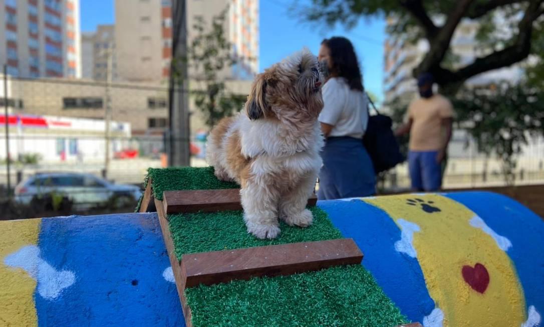 Parcão revitalizado na Tijuca tem diferentes ambientes e equipamentos para os pets Foto: Divulgação