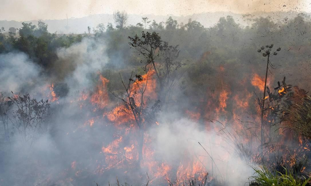 Fogo queima floresta no município de Novo Progresso (PA), em agosto de 2020 Foto: Lucas Landau / © Lucas Landau / Greenpeace