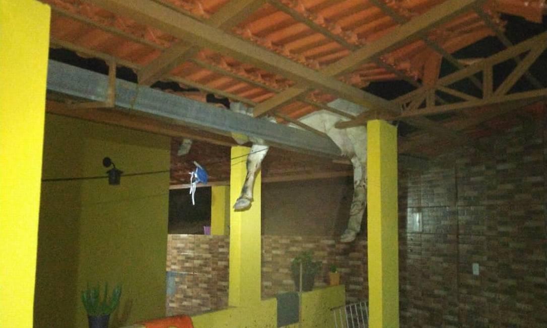 Pernas de vaca são vistas dentro de casa após queda em telhado Foto: CBMMG