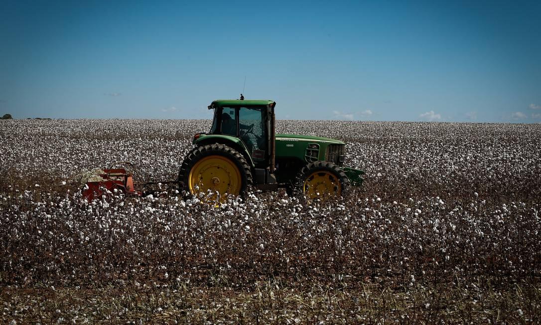 Plantação de algodão na Bahia Foto: Pablo Jacob / Agência O Globo