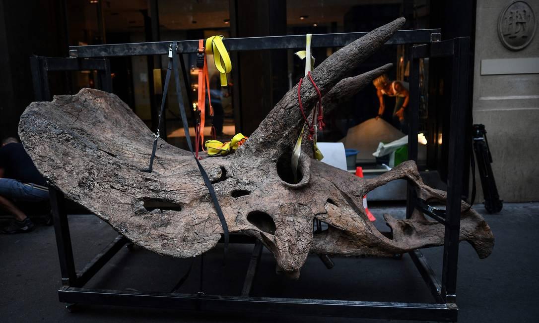 El cráneo de Trichoderma se lleva a la galería, donde se exhibirá ante la casa de subastas de truchas.  En octubre.  -
