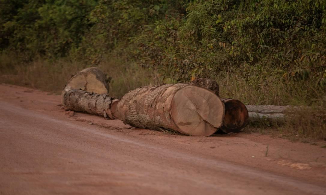 Troncos colocados à beira da estrada Transamazônica, no território do Pará: sinal da exploração madeireira Foto: Brenno Carvalho em 1-6-2021 / Agência O Globo