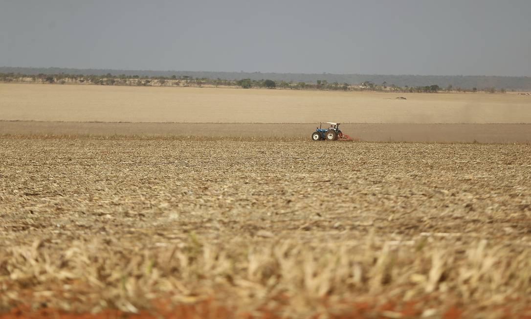 07/10/2020 - Plantações de soja completamente secas por causa da falta de chuva, em Cabeceiras (GO) Foto: Jorge William / Agência O Globo