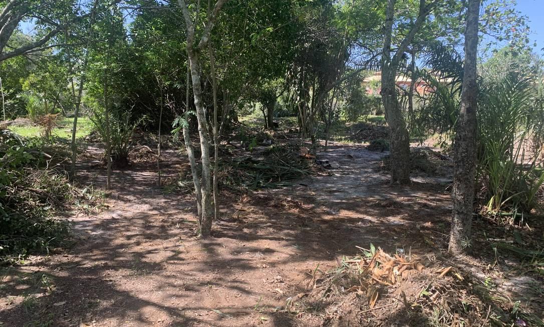 Vegetação no chão: corte de árvores atingiu área de restinga, onde há diversas espécies de fauna e flora Foto: Divulgação