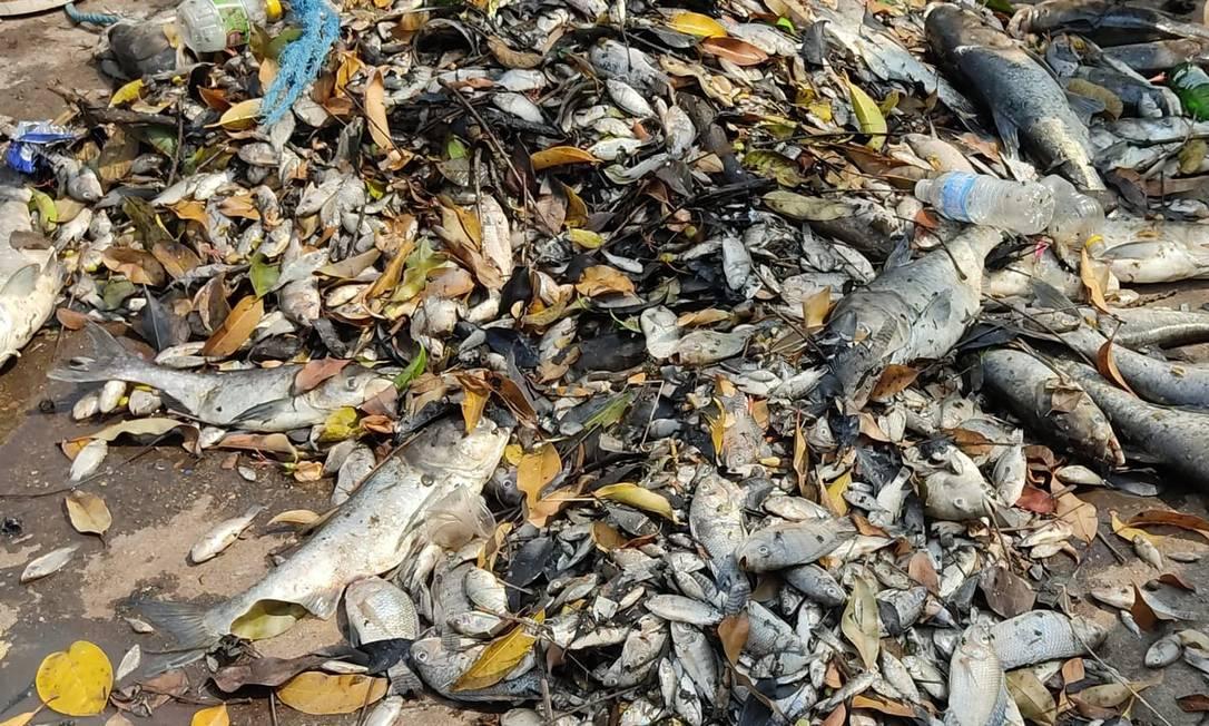 Chuva escura provocou a morte de peixes em São Sebastião do Paraíso Foto: Divulgação