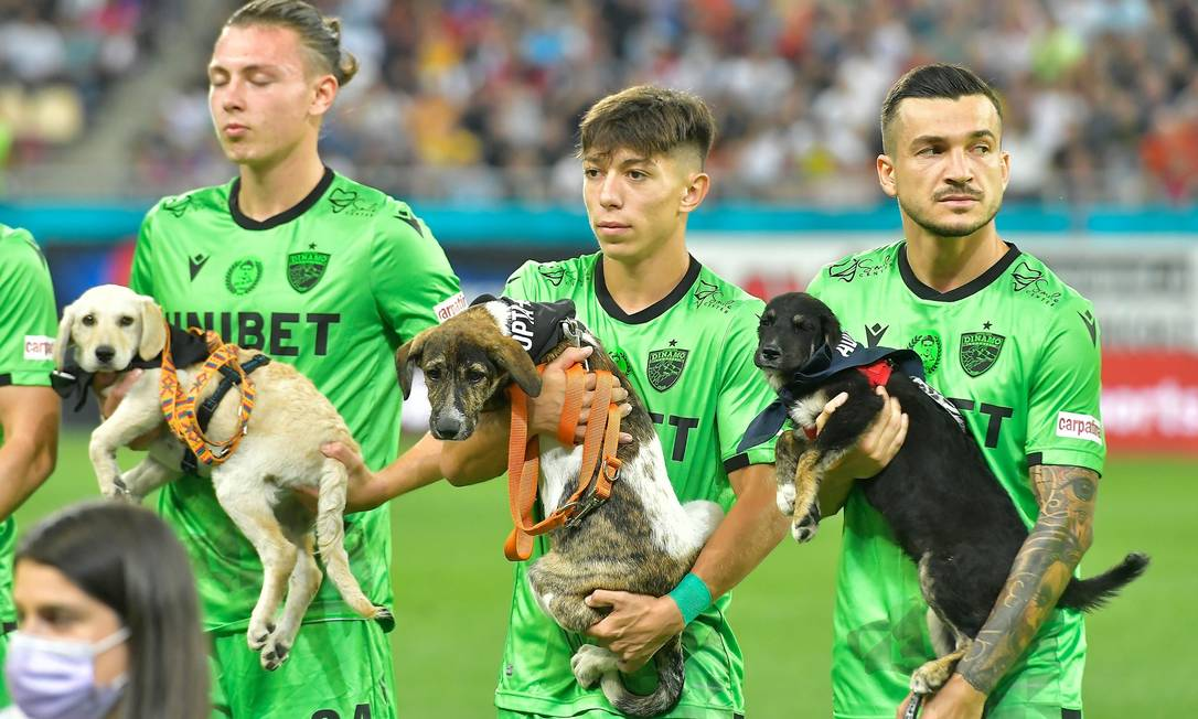 Federação Romena de Futebol decidiu que os jogadores entrarão em campo acompanhados por cães que foram abandonados Foto: Reprodução facebook/ Digi Sport
