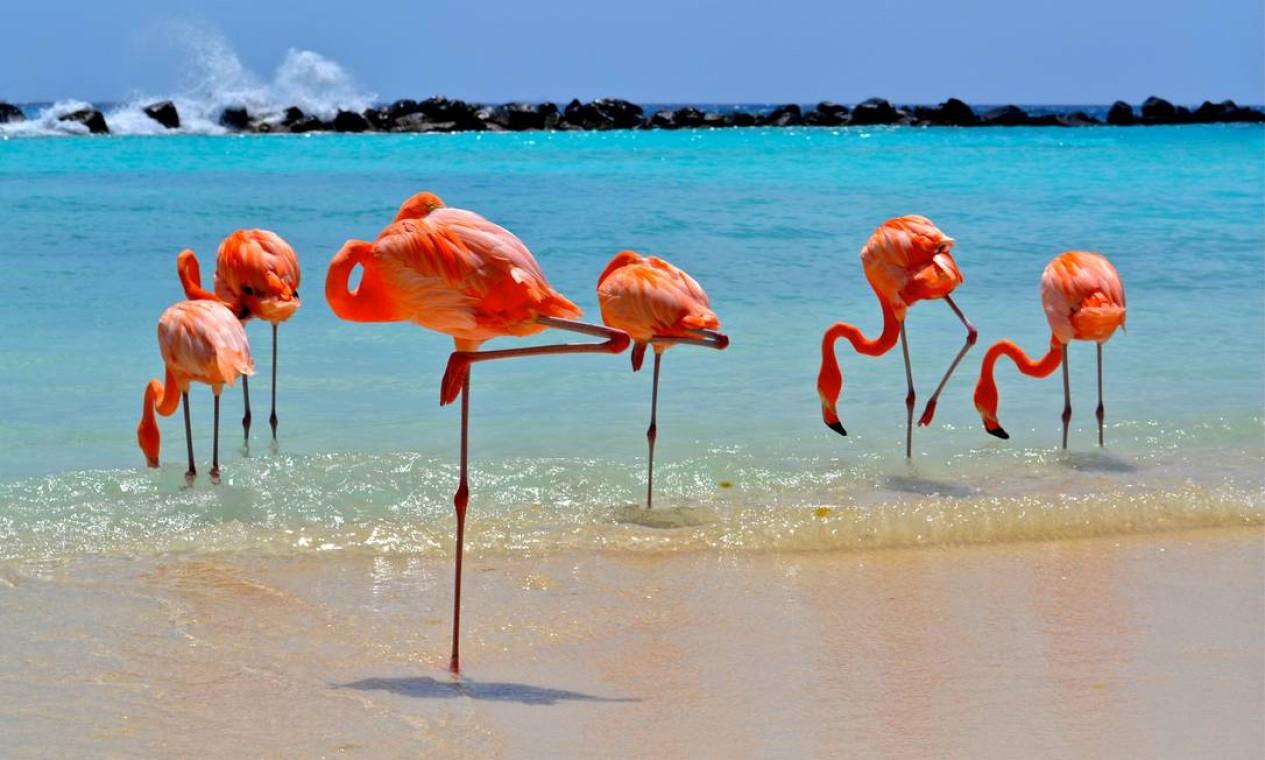 ARUBA - A pequena ilha do Caribe, que pertence ao Reino dos Países Baixos, registrou em 2017 um PIB de 3 bilhões de dólares, o que daria quase R$ 15 bi – situação semelhante a outras ilhas holandesas como Curaçao (R$ 16 bi) e São Martinho (R$ 1,9 bi) Foto: Arquivo / Agência O Globo